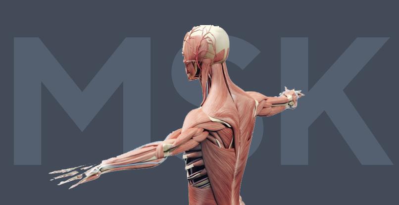 Strukturierte Befundung für muskuloskelettale Bildgebung